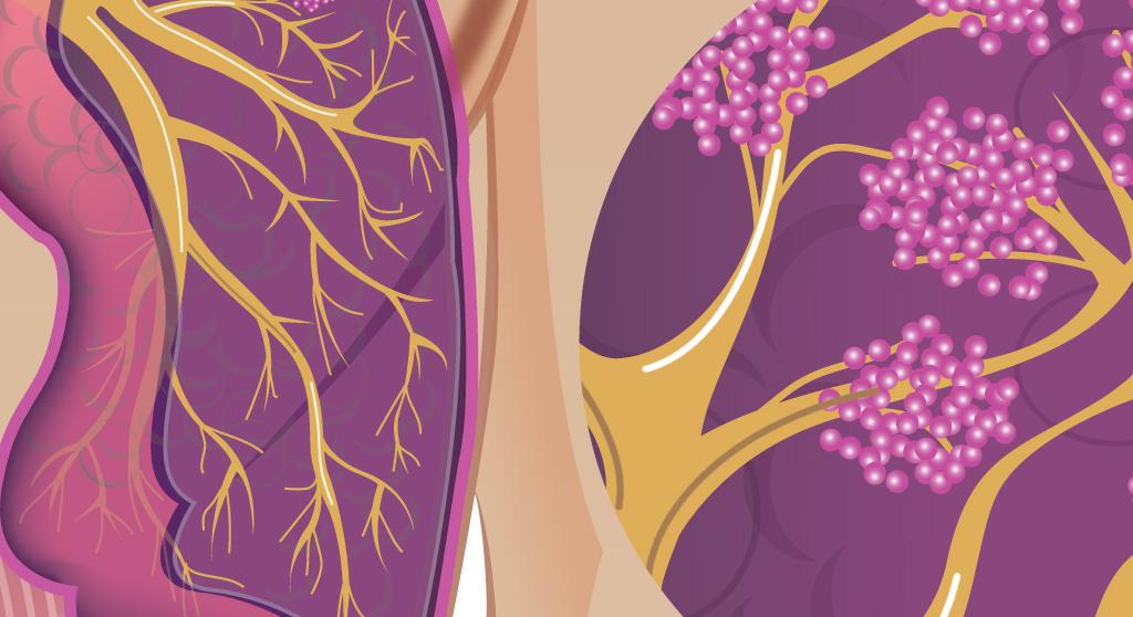 <p>Planches de vulgarisation médicale, pour application mobile sur divers sujets du corps humain</p>